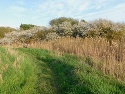 Filsham Reedbed Nature Reserve