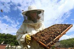 Nottingham Bees