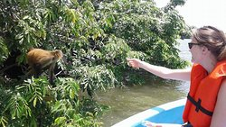 beautiful tour of the islets of Granada customers feeding Lucy the spider monkey # feeding the m