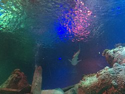 Loch Lomond Sea Life Aquarium