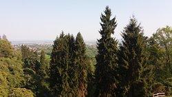 veduta con alberi