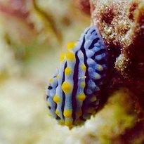 3Willys Diving Phuket