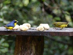 Idealer Platz für birdwatcher