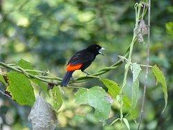 Unmengen an Vogelarten besuchen den Futterplatz im Garten