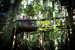 Sea Acres Rainforest Centre Port Macquarie