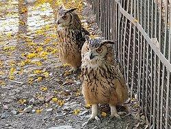 Indore Zoo