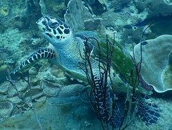Koh Chang Divers