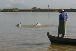 Living Irrawaddy Dolphin Project