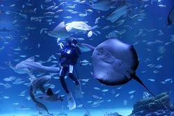 Alive Aquarium Daegu