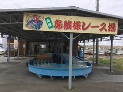 Kazama-mura Squid Center
