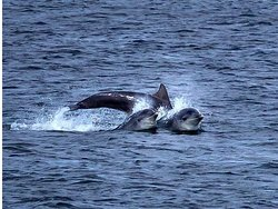 Dolphins playing in the bay