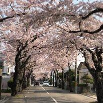 Sakuragaoka St.