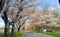Toda Memorial Park Cemetery