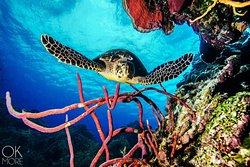 CozuDive, Scuba Diving & Snorkeling