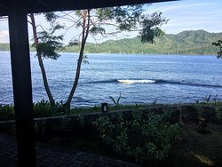 Dive into Lembeh @Hairball Resort