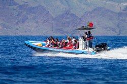 Magic Dolphin Sea Safaris