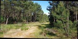 Reserva Natural das Dunas de Sao Jacinto