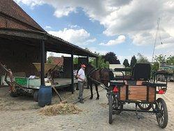 Eigenaar Luc net voor een ritje met paard en wagen