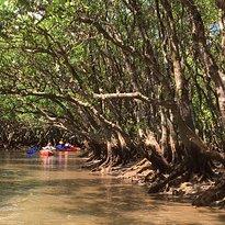 Kuroshio no Mori Mangrove Park