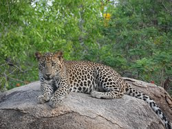 Yala Nisha Safari