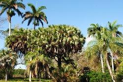 Jardín Botanico de Cienfuegos
