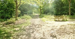 Hamstreet Woods National Nature Reserve