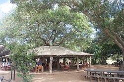 Tshokwane Picnic Site