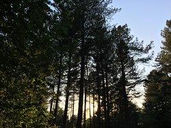 A wonderful week in the woods