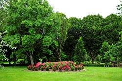 Adare Park