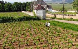 Bourgogne Gold Tour
