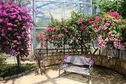 Hibiya Kadan Ofuna Flower Center