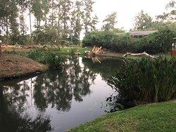 Long weekend at Ngwenya lodge