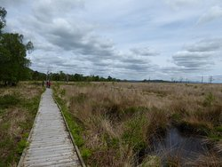 Foulshaw Moss Nature Reserve