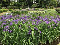 Shirokita Park