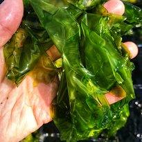 Mungo Murphy's Seaweed Co.