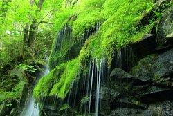 滝と苔のコラボが美しい