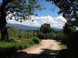 Vineyard stay in Tuscany
