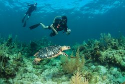Diving with turtles in West Bay Beach with Infinity Divers!