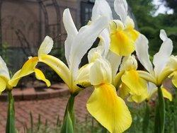 Beech Creek Botanical Garden & Nature Preserve