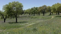 Cork trees and wildflowers Coa Valley Archaeological Park