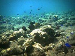 Bali Luxury Divers