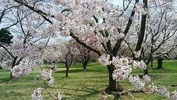 Oniushi Park