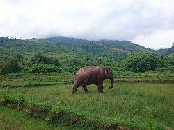 Vang Vieng Elephant Sanctuary