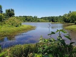 Constitution Lakes