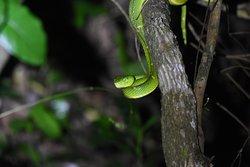 Aguti Monteverde - Wildlife Reserve