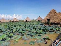 Lotus Farm by Samatoa