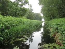 Holme Fen National Nature Reserve