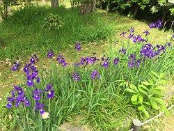 Manyo Botanical Garden