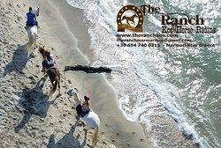 The Ranch Kos Horse Riding - Horse Riding Activities on the Island of Kos