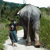 Elephant Freedom Project
